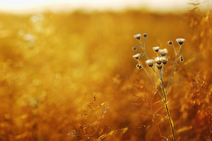 meadow flowers chamomiles in orange field background. Natural sunny autumn landscape