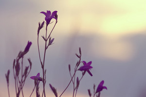 Meadow flowers in field. Natire spring