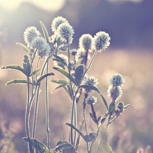 Meadow flowers in spring