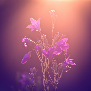 Meadow flowers on colorful sunrise background. Nature in spring