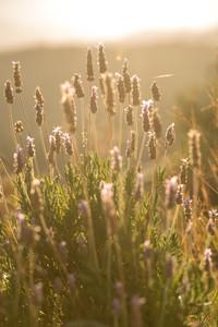 meadow spring flowers in field in morning