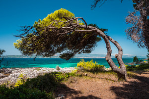Mediterranean landscape with the pine tree on coast bent toward the sea from the wind, emerald bay and clear water, Greece