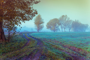 Mist over the field in the early morning. Rural landscape with dirt road at sunrise