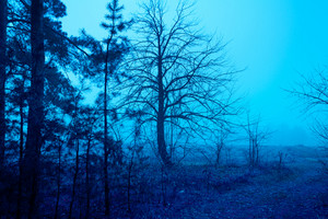 Misty morning. Rural landscape in autumn. Blue colored. Outer wood.