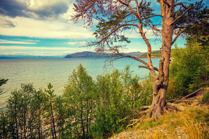 Mountain lake shore with the pine tree. Beautiful nature of Norway.
