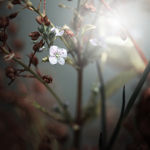 mystery beautiful white vintage flower background