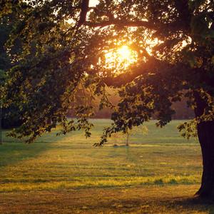 natural autumn park in evening sunshine
