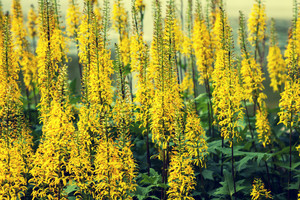 Natural flower background, summertime