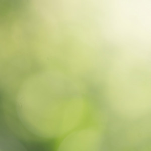 Nature abstract. Spring green background