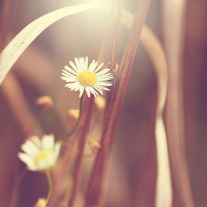 Nature. Flowers in gry grass. Macro