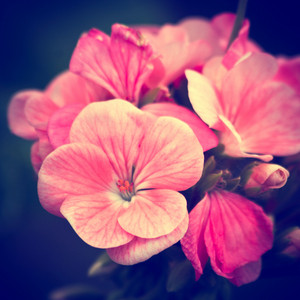 Nature flowers. Macro spring