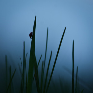 Nature. Grass in fog. Fresh morning
