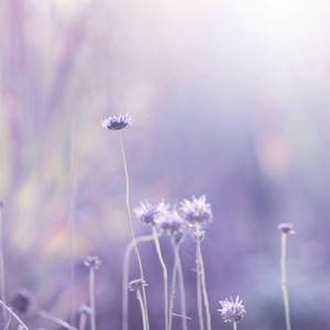 Nature. Spring romantic meadow flowers