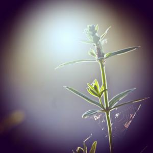 Nature. Vintage flowers. Macro
