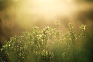 Nature vintage outdoor background. Many green wild meadow flowers in field in morning sunrise
