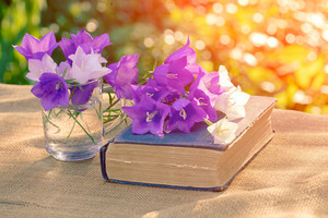 old shabby book and flowers in the garden in sunny day