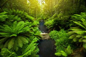Ottway Ranges, Australia