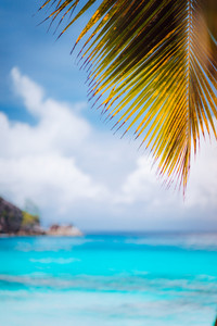 Palm branch against blue ocean, blurred background, summer abstract backdrop design, beach vacation travel exotic tropical holiday concept