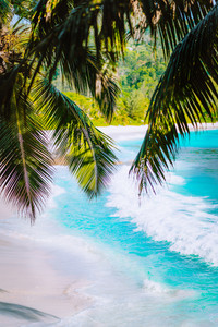 Palm tree leaves on beautiful tropical paradise Anse intendance beach. Ocean wave roll on sandy beach with coconut palm trees. Mahe, Seychelles