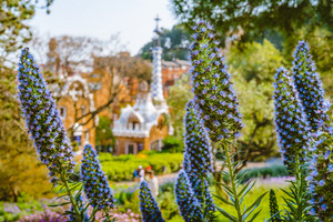 Park Guell. Violet flower in foreground and defocused colorful mosaic building in evening warm light in background, Barcelona, Spain