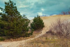 Parnidis dune slope in autumn, Neringa, Lithuania