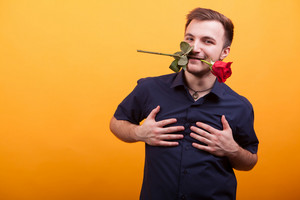 Passionate young man holding red rose in mouth over yellow background. Young love