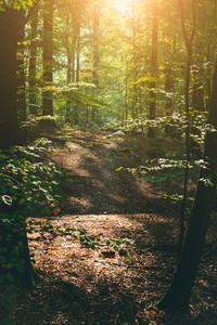 Pathway in the forest with sunlight flares
