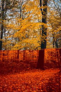 Pathway near huge yellow golgen tree in the autumn forest
