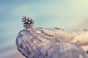 Pine cone exotic vacation on beach by sea