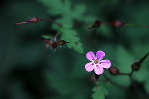 pink flower in green plants background