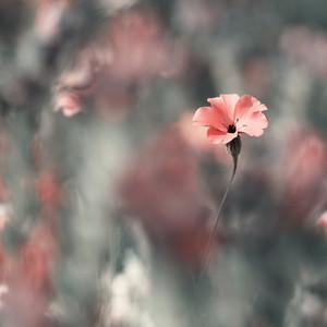 Pink flower. Nature vintage
