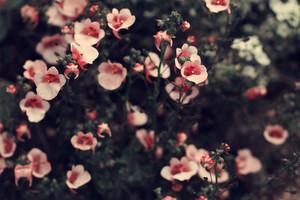 pink soft flowers vintage background