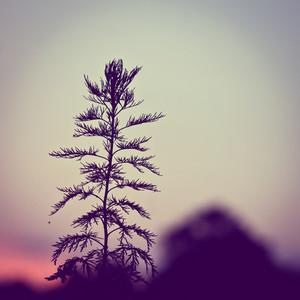 plants on vintage sky background in evening. Sunlight