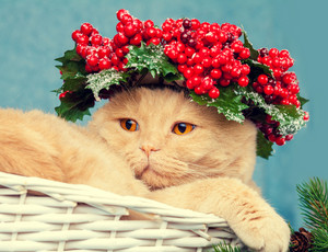 Portrait of cat with green Christmas wreath on the head