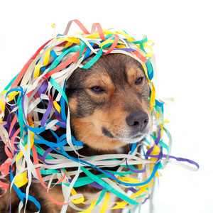 Portrait of dog entangled in colorful streamer on the snow