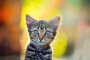 Portrait of dreaming little kitten outdoor at sunset light