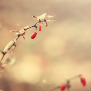 red berries in forest. Nature outdoor