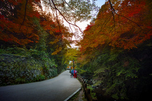 red color leaves autumn season in mino water falls one of most popular traveling destination in osaka japan