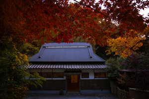 red color leaves in autumn season mino-waterfalls osaka japan one of most popular traveling destination
