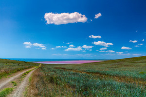 Road to the pink lake in the steppe near the sea