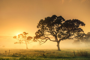 Rural sunrise on a misty morning