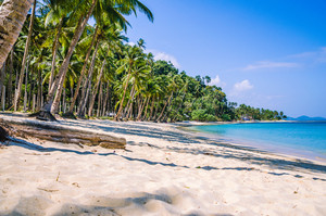 Sandy Beach with Palm trees, El Nido, Palawan, Philippines