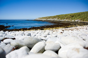 Sea Lions lying on an Isolated Beach in the Falkland Islands.