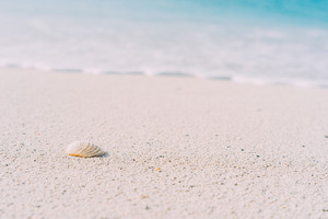 Seashell on sandy beach with defokused white foam of rolling ocean waves in background. Tropical beach with azure water