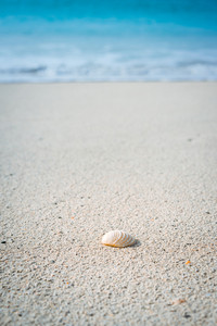 Seashell on sandy beach with white foam of rolling ocean waves in background. Tropical beach with azure blue water