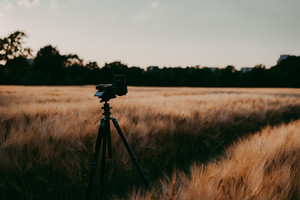 silhouette of camera on tripod in wheat field capturing during evening sunset light