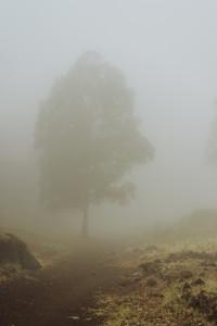Silhouette of trees in milky fog on the bottom of cove Vulcan creator . Santo Antao. Cape Verde
