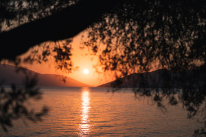 Silhouette olive tree branch in morning warm sunrise light. Sun shape above Mediterranean sea. Sun ray reflection bokeh beams on rippled water surface in early hours