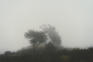 Silhoutte of trees and an house in the milky fog