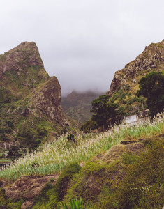 Small house nestled between steep rock overgrown with sugarcane plants. Santo Antao, Cape Verde